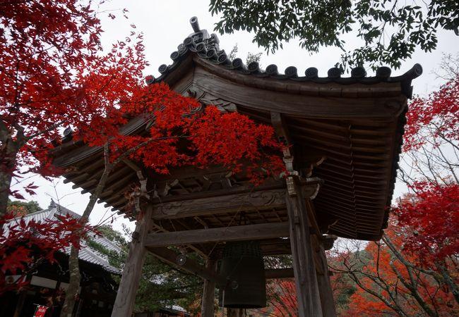 参道を高く覆うように紅葉が枝を伸ばしていて