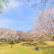 たくさん桜の木がありました