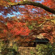 紅葉のお庭