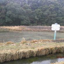 四万十トンボ自然公園