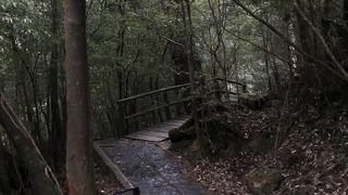 気軽に屋久杉を見て回れる施設です。
