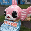 市立室蘭水族館