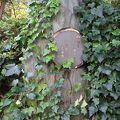 写真:水原秋桜子の石碑