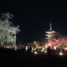 東寺の五重塔と紅葉と不二桜