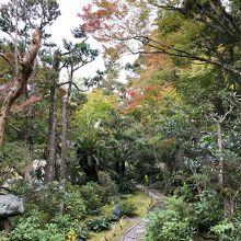 庭にも季節ごとの木々がうまく配置されています。