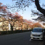 桜の季節でなくても、散策している人が結構居ました。