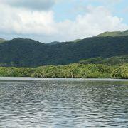 流域に多種類のマングローブが茂る仲間川
