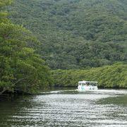 マングローブ群生林が見られる仲間川遊覧