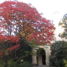 紅葉真っ盛りでした。