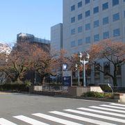 桜の花がなくても、散策には良い道路でした。