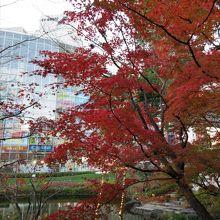 12月中旬でしたがまだ紅葉が楽しめました。