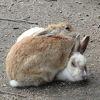 目が悪いはずなのに、遠くから駆け付けてきます。ウサギさんのことです。