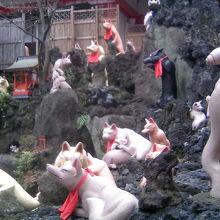 境内の狐の大群
