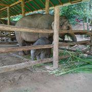 芸達者な象さんが可愛い