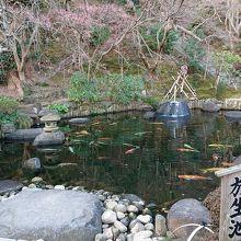 長谷寺入口側の池です。立派な鯉と垂れ桜が良いです。
