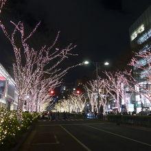 ケヤキの街路樹に輝くイルミネーション