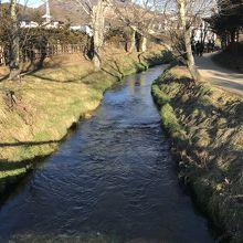 湧き水は豊かな川になって流れて行きます