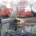 小石川後楽園 内庭