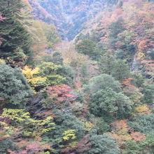 紅葉が綺麗です プロムナードコースの事実上最奥地
