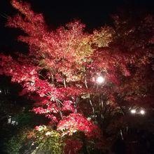 松島紅葉ライトアップ(円通院)