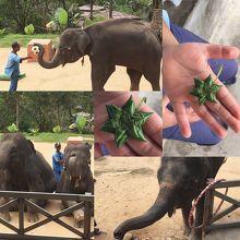 象のショー風景と象使いさんが作ってくれたペンダント