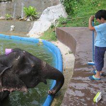 象をブラシで洗えます