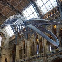 巨大骨格標本がお出迎え。