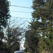 国道1号沿いの並木。