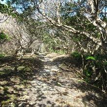 樹木が繁茂した遊歩道を通っていきます。