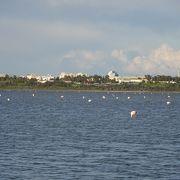 ラルナカの塩湖
