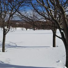 冬は柔らかい景色!