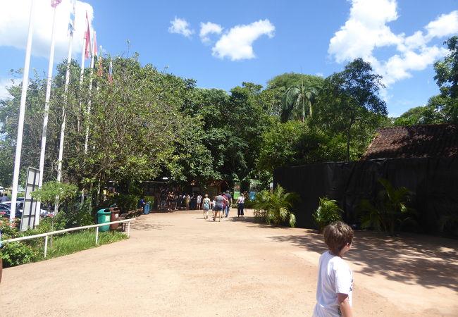 ブラジルの国鳥トゥッカーノを見ることができます