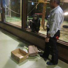 飼育員さんによる夜間のチンパンジー解説の様子