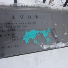 北海道が誇るべき固有種の筈、なんですけどね…。
