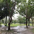 写真:大安森林公園
