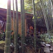 竹を見ながらお抹茶を