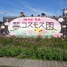 関西最大級のコスモス園