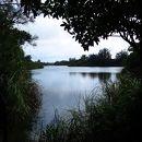 大池とオヒルギ群落