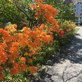 写真:クライストチャーチ植物園
