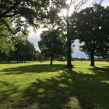 広々とした公園