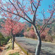 2月でも桜や梅を見ることができます!