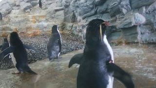 ペンギンが飛んでます。