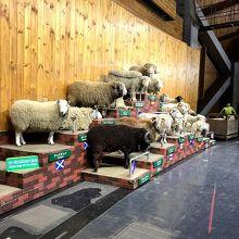 各国の羊たち