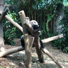パンダがスムーズに見れました。