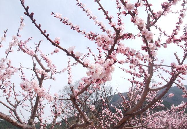 信州の春を知らせる祭り