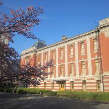オオカンザクラと建物とのコラボ風景の一例