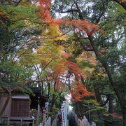 参道の空間は紅葉に包まれたような独特の感覚