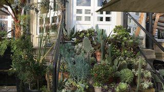 Kafe Botanika