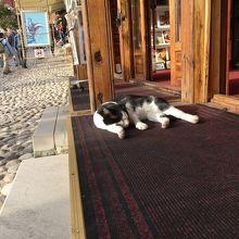 店先では猫が昼寝してました。
