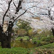 桜が開花し賑やかでした